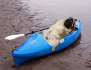 comfort pug on kayak